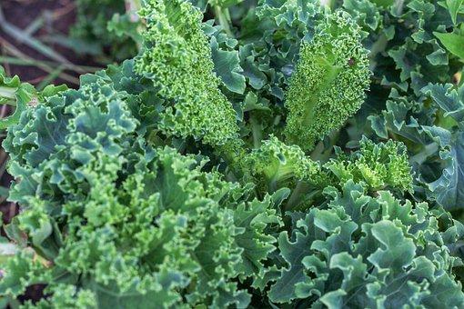 Kale, Vegetable, Plant, Green, Leafy Vegetables, Food