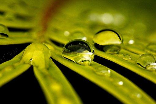 Leaves, Dew, Reflection, Dewdrops, Fern, Green, Plant