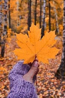 Leaves, Foliage, Maple, Autumn, Beautiful, Brown