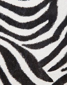 Zebra, Pattern, Wallpaper, Animal, Mammal, Striped