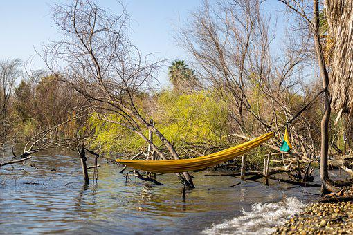 Hammock, Lake, Forest, Nature, River, Woods, Water