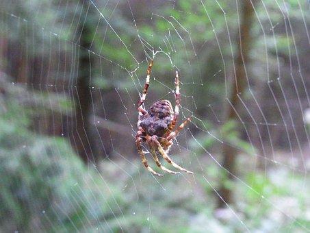 Spider, Arachne, Cobweb, Network, Animal, Forest