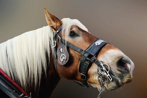 Horse, Close Up, Horse Head, Animal Portrait, Animal