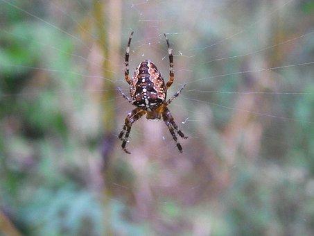 Arachne, Spider, Network, Cobweb, Animal, Forest
