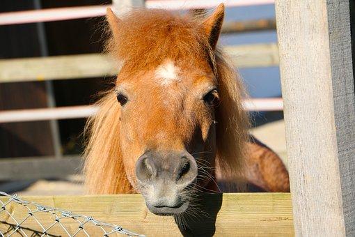 Animal, Pony, Hair Mane, Nostrils, Fencing