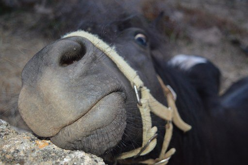 Horse, Face, Harness, Funny Face, Funny Photo, Nose