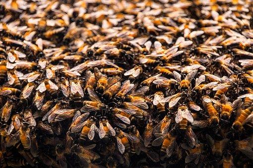 Bees, Hive, Hexagon, Beehive, Hexagons, Honeycomb