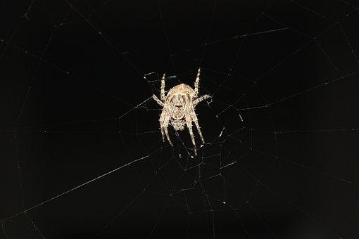 Spider, Network, Nature, Arachnids, Close, Legs, Insect