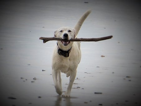 Dog, Beach, Dog On Beach, Most Beach, Water, Animal