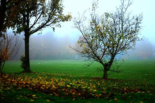 The Fog, Autumn, Tree, Bush, Landscape, Nature, Morning