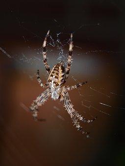 Spider, Close, Network, Insect, Nature, Invertebrates