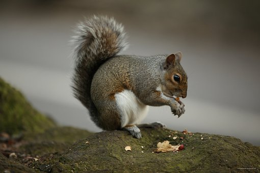 Squirrel, Eating, Nuts, Sitting, Rocks, Stones, Alone
