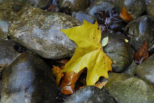 Maple, Stones, Leaves, Leaf, Autumn, Nature, Water