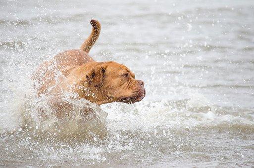 Pet Photography, Dog, Water, North Sea, Sea, Lake, Race