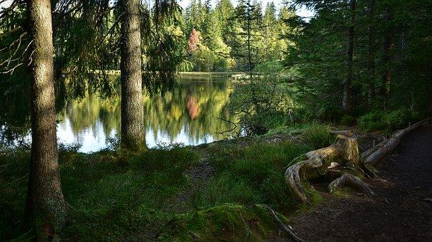 Nature, Lake, Trees, Outdoors, Travel, Hike