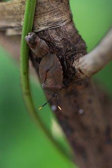 Insect, Beetle, Entomology, Macro, Bug