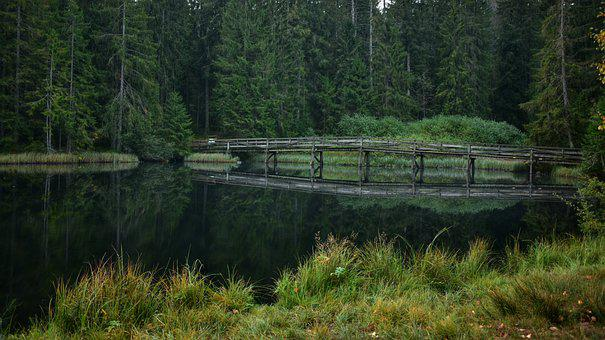 Lake, Nature, Bridge, Forest, Water, Reflection, Trees