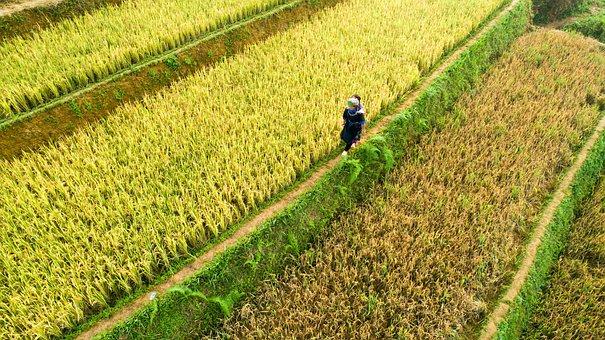 Terraces, Farm, Landscape, Rice, Paddy Field, Footpath