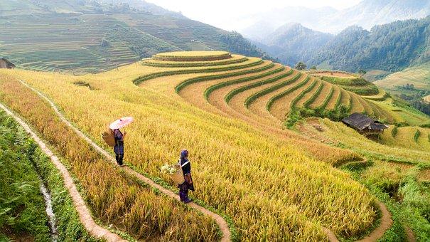 Agriculture, Terraces, Nature, Field, Plantation