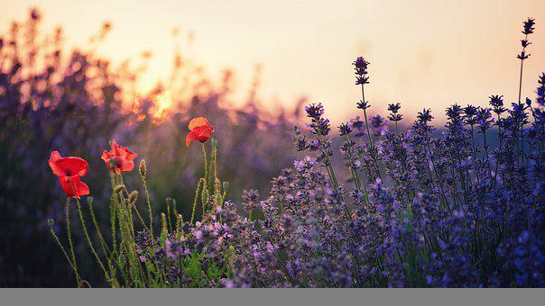 Flowers, Nature, Field, Meadow, Bloom, Blossom, Plant