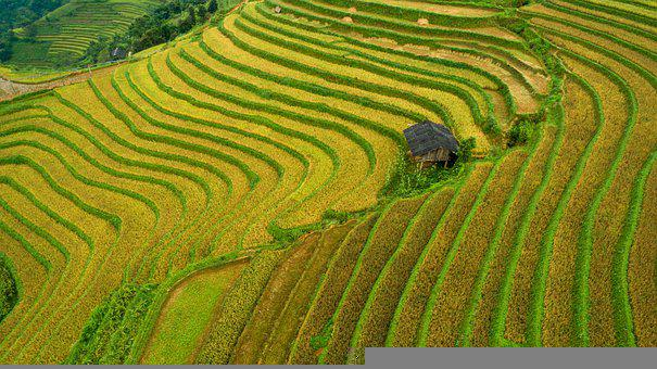 Agriculture, Terraces, Countryside, Nature, Field, Farm