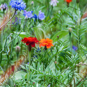 Flowers, Meadow, Bloom, Blossom, Nature, Field, Flora