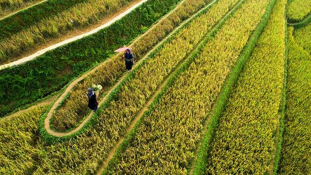 Agriculture, Nature, Field, Farm, Plantation, Land