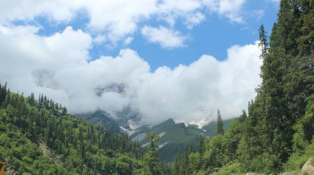 Nature, Trees, Travel, Exploration, Outdoors, Landscape