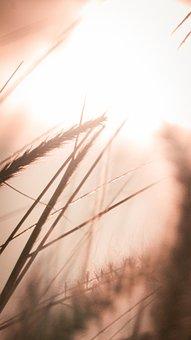 Grass, Plants, Sunlight, Meadow, Nature, Sunset, Light