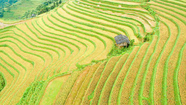 Terraces, Farm, Landscape, Rice, Paddy Field, Hut