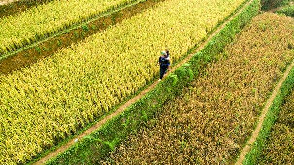 Agriculture, Nature, Plantation, Field, Farm, Land