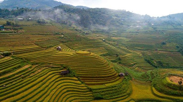 Agriculture, Nature, Terraces, Field, Plantation