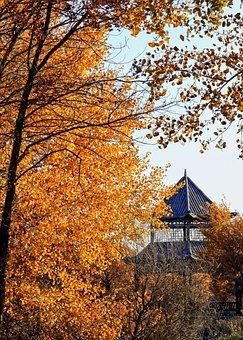 Tree, Autumn, Leaves, Fall, Temple, Season, Travel
