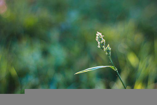 Grass, Meadow, Lawn, Field, Green Nature, Green, Nature