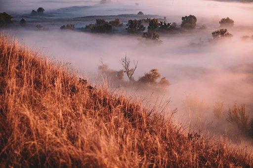 Fog, Nature, Trees, Outdoors, Travel, Exploration
