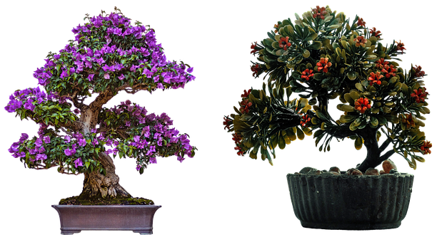 Bonsai, Japanese Culture, Gardening, Tradition