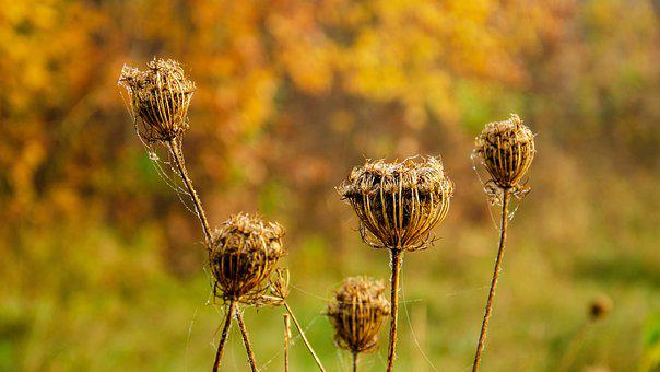 Autumn, Nature, Fall, Plant, Withered, Green, Yellow