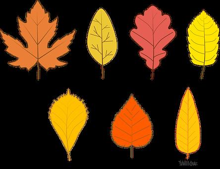 Autumn, Leaves, Leave Types, Fall, Maple Leaf
