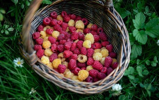 Fruit, Raspberry, Harvest, Berry, Organic, Healthy