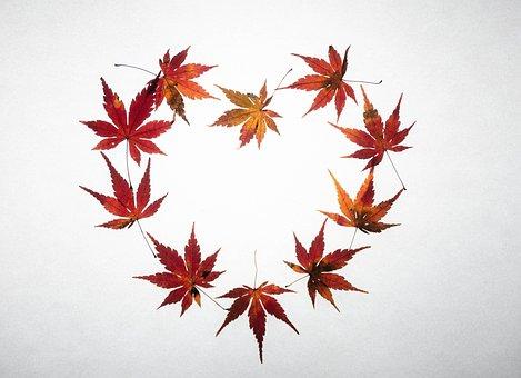 Maple Leaves, Heart, Fall, Maple, Leaves, Autumn Leaves