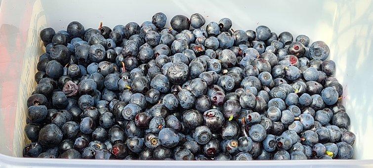 Blueberries, Berries, Fruits, Food, Fresh, Healthy