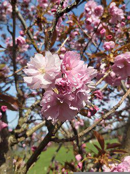 Flowers, Magnolias, Plant, Blossom, Bloom, Spring