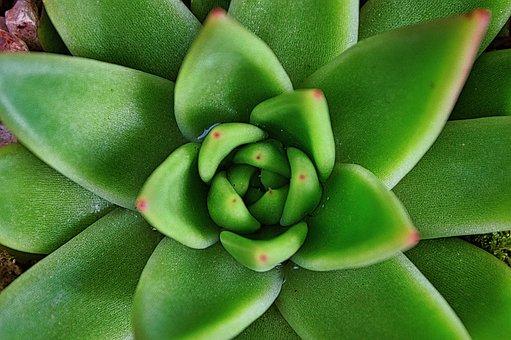 Flower, Petals, Succulent, Spring, Plants, Flora