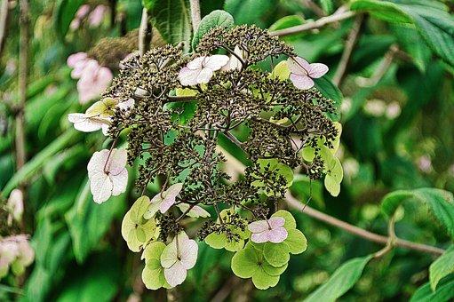 Flowers, Petals, Plants, Spring, Flora, Botanical