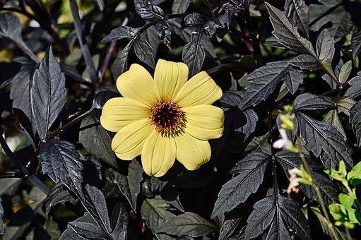 Flower, Yellow Flower, Garden, Yellow Petals, Leaves