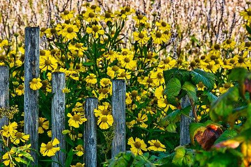 Jerusalem Artichoke, Flowers, Yellow Flowers, Garden