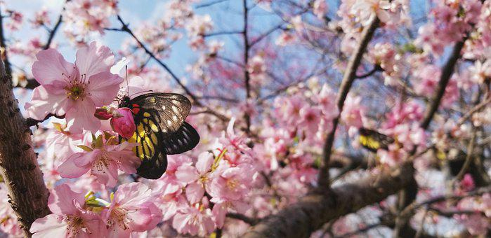 Redbase Jezebel Butterfly, Butterfly, Flowers
