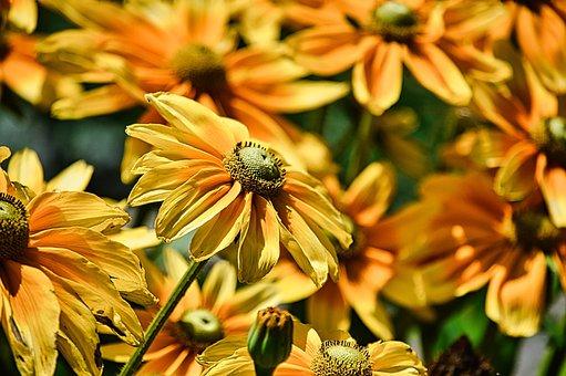 Flowers, Yellow Flowers, Garden, Yellow Petals, Petals