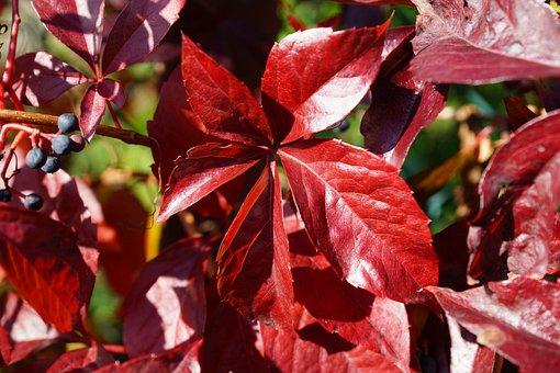 Leaves, Autumn Leaves, Foliage, Macro, Fall, Autumn