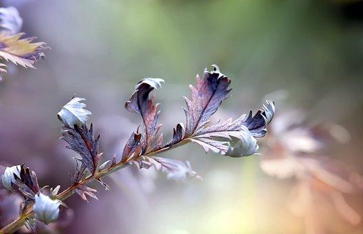 Leaves, Foliage, Meadow, Autumn, Macro, Nature